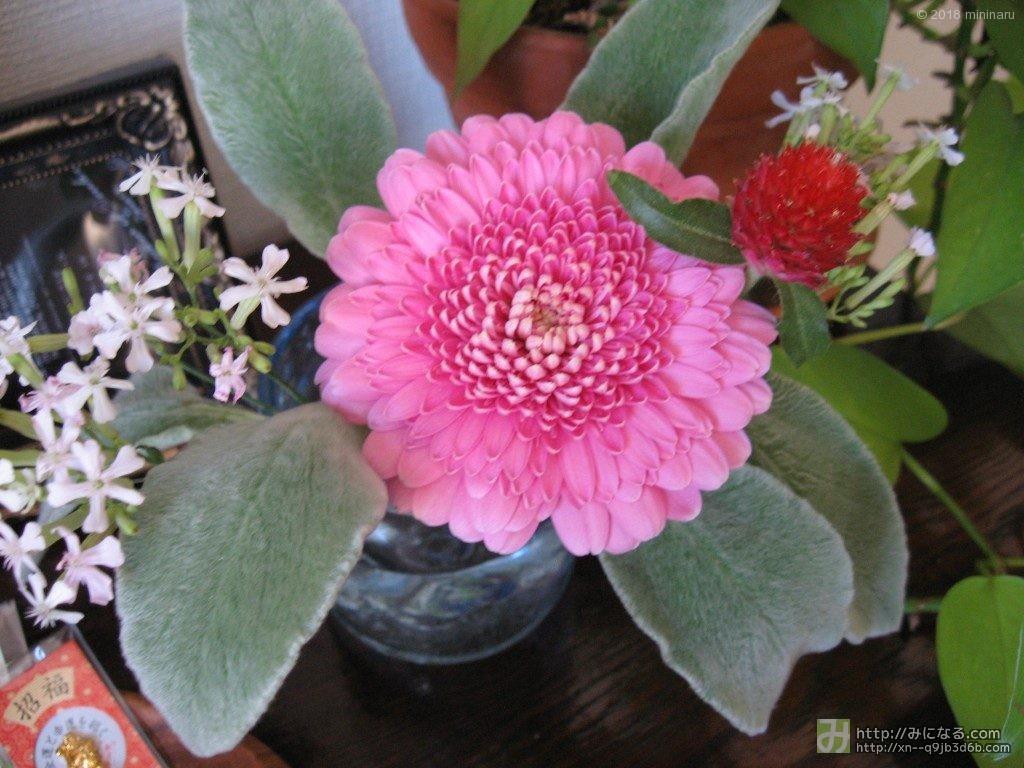 お花屋さんの花束をグラスに生ける