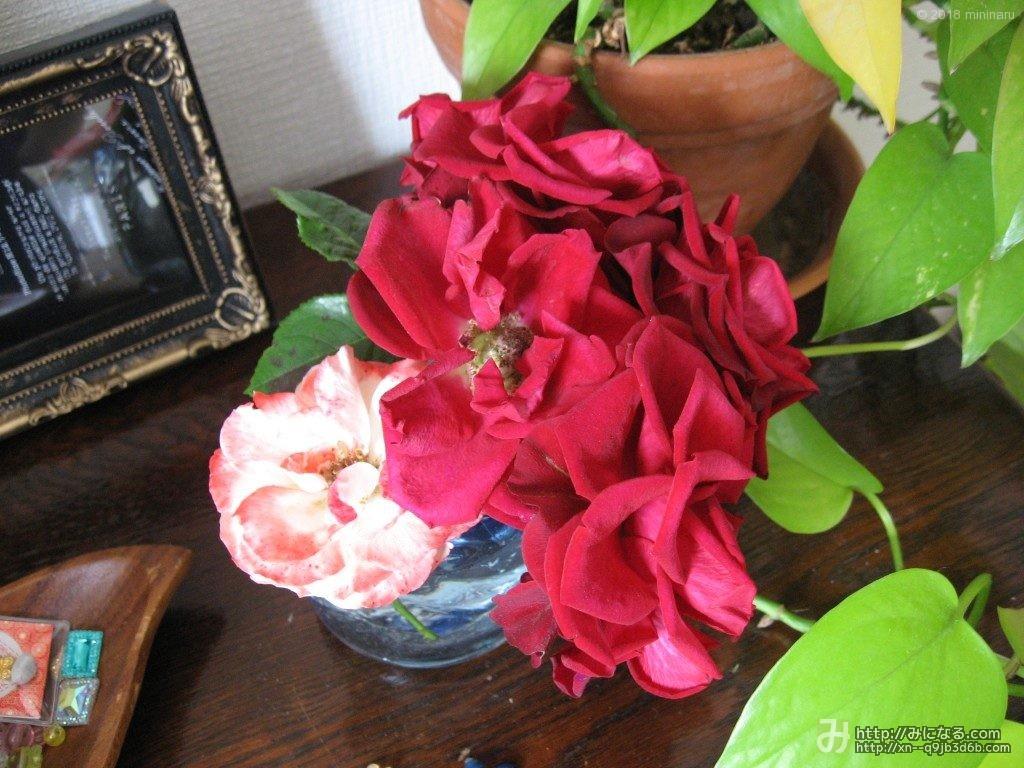 格子状のテープのグラスに飾った赤いバラ