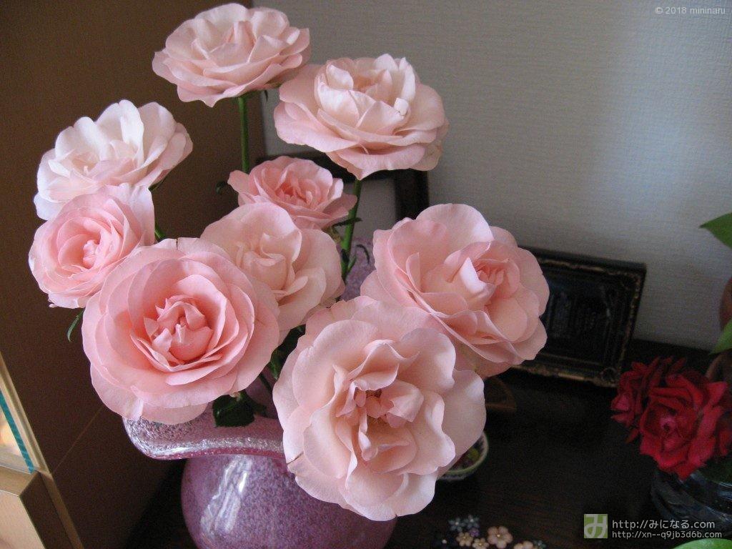 お土産のバラ